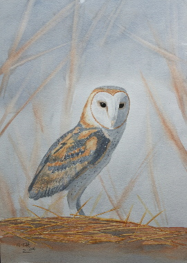 watercolour painting, Barn Owl