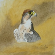 Falcon, watercolour painting