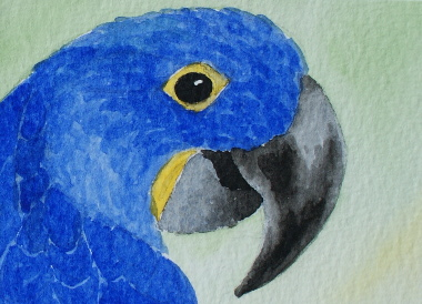 watercolour painting, Hyacinth Macaw
