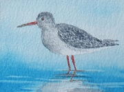 Redshank in watercolour