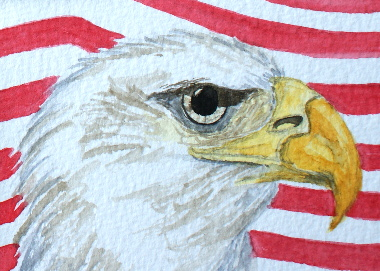 watercolour painting, Bald Eagle